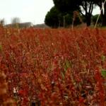 Orto sociale a Nettuno Anzio: non hai spazio per coltivare ortaggi? Realizza il tuo orto con 30€ al mese.